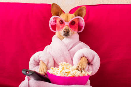 Foto de chihuahua dog watching tv or a movie sitting on a red sofa or couch  with remote control changing the channels with popcorn - Imagen libre de derechos