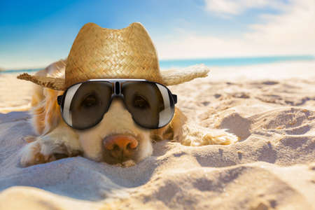 Photo pour golden retriever dog relaxing, resting,or sleeping at the beach, for retirement or retired - image libre de droit