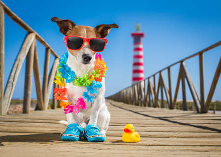Foto de jack russel dog  at the beach ocean shore, on summer vacation holidays  with a plastic duck, lighthouse at the back - Imagen libre de derechos