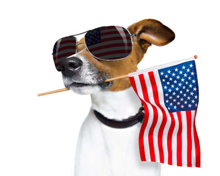 Foto de jack russell dog celebrating  independence day 4th of july with  usa flag in mouth,  isolated on white background - Imagen libre de derechos