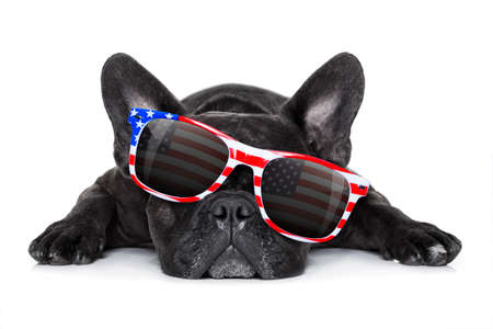 Photo pour french bulldog dog celebrating  independence day 4th of july with  sunglasses,  isolated on white background - image libre de droit