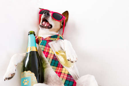 Foto de drunk jack russell terrier dog resting  or sleeping hangover with headache, with bottle and glass , wearing sunglasses and tie - Imagen libre de derechos