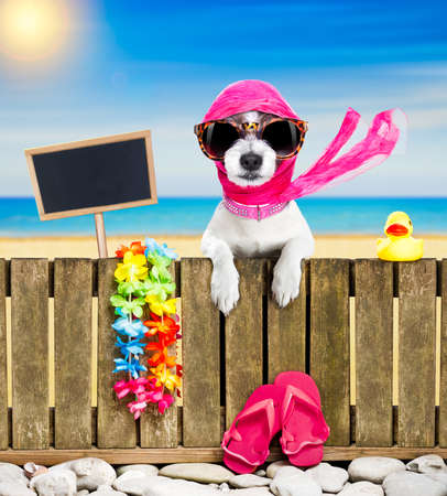 Foto de terrier dog resting and relaxing on a wall or fence at the  beach  ocean shore, on summer vacation holidays, wearing sunglasses, empty banner and placard to the side - Imagen libre de derechos
