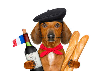 Foto de dachshund sausage dog with beret hat, isolated on white background,with red wine and baguette and french hat and flag - Imagen libre de derechos