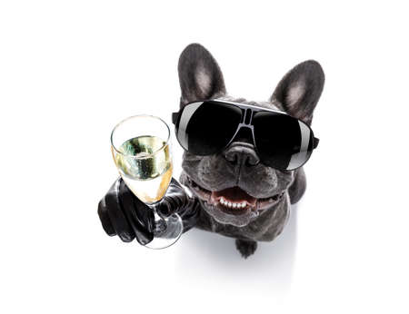 Foto de cool drunk french bulldog  dog cheering a toast with cocktail drink , looking up to owner ,   isolated on white background - Imagen libre de derechos