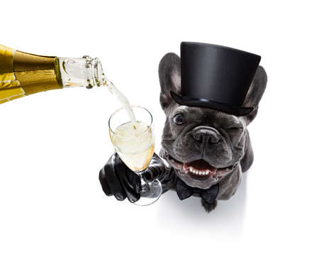 Foto de french bulldog dog celebrating new years eve with owner and champagne  glass isolated on white background , wide angle view - Imagen libre de derechos