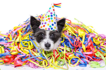Foto de poodle dog having fun and  a party with serpentine streamers, for birthday or new years eve ,wearing a hat ,  isolated on white background - Imagen libre de derechos