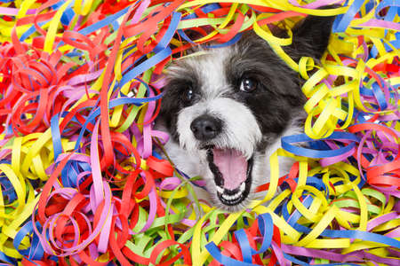 Foto de poodle dog having a party with serpentine streamers, for birthday or happy new year  laughing out loud - Imagen libre de derechos