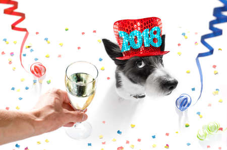 Foto de poodle dog celebrating new years eve with owner and champagne  glass isolated on white background , serpentine streamers and confetti - Imagen libre de derechos