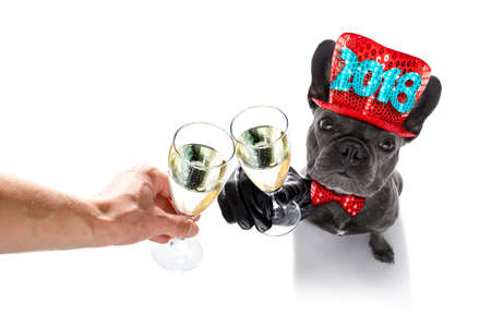 Foto de french bulldog dog celebrating 2018 new years eve with owner and champagne  glass isolated on white background , wide angle view - Imagen libre de derechos