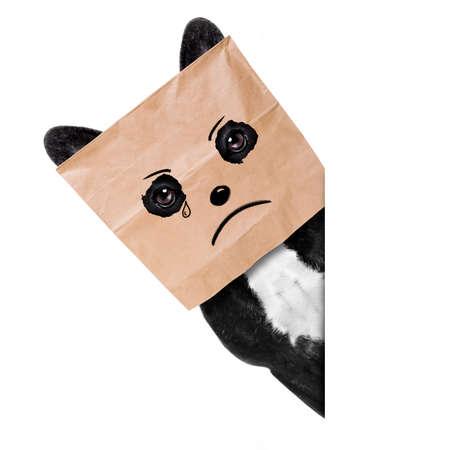 Foto de Sad crying french bulldog , hiding behind a paper bag on his head, isolated on white background - Imagen libre de derechos