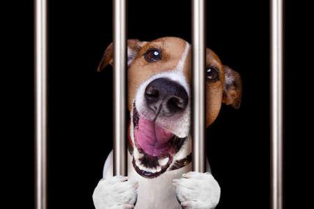 Photo for criminal dog behind bars in police station, jail prison, or shelter  for bad behavior - Royalty Free Image