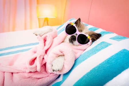 Photo pour cool funny  poodle dog resting and relaxing in   spa wellness salon center ,wearing a  bathrobe and fancy sunglasses - image libre de droit
