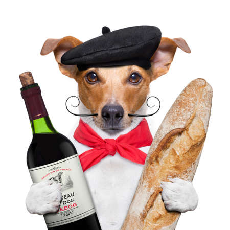 Photo pour french jack russell  dog  with  red wine baguette and  beret, isolated on white background - image libre de droit