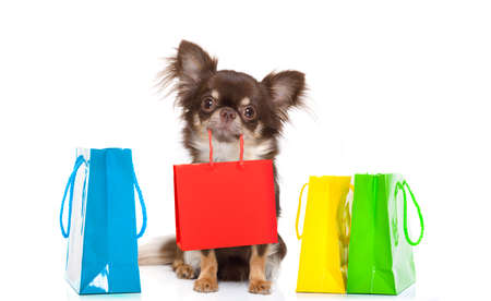 Foto für chihuahua dog holding a shopping bag ready for discount and sale at the  mall, isolated on white background - Lizenzfreies Bild