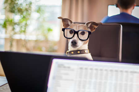 Jack Russell dog  with glasses as secretary or operator with red old  dial telephone or retro classic phone and pc laptop computer