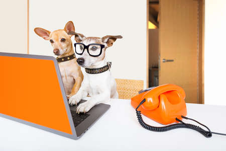 Foto de Team or couple of dogs  with glasses as secretary or operator with red old  dial telephone or retro classic phone and pc laptop computer - Imagen libre de derechos