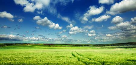 Photo pour Green meadow in mountain. Composition of nature. - image libre de droit
