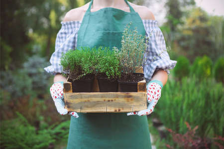 Photo pour Woman holding a box with plants in her hands in garden center. Close up - image libre de droit