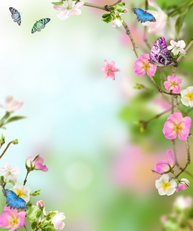 Background nature from fllowers with butterfly