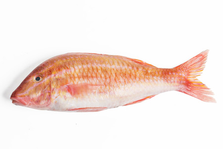 Photo pour Red mullet fish isolated on white background - image libre de droit