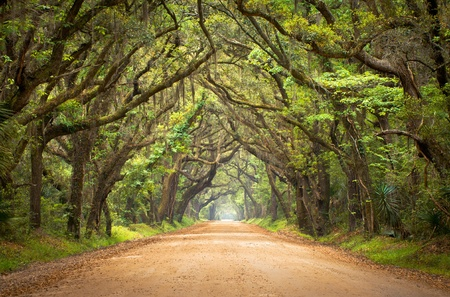 Botany Bay Plantation Spooky Dirt Road Creepy Marsh Oak Trees Tunnel with spanish moss on Edisto Island, SC