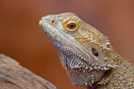 Foto de Colorful Lizard - Imagen libre de derechos