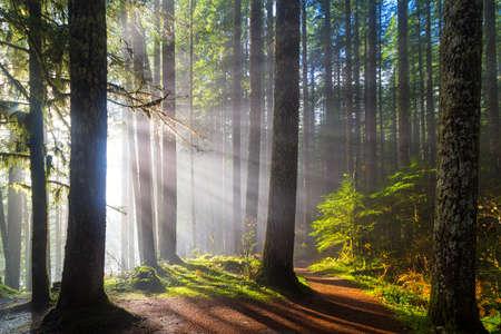 Photo pour Sunbeams at Lower Lewis River Falls Hiking Trails in Washington State - image libre de droit
