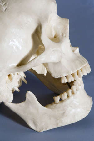 model of human skeleton in laboratory used for teaching