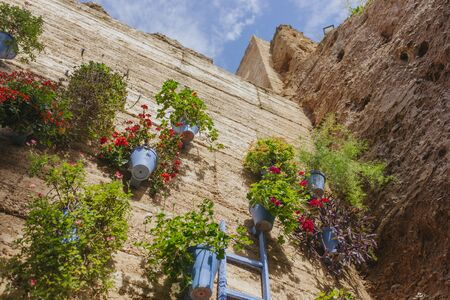 Photo pour Street wall full of plants and flowers at Cordoba courts fest. - image libre de droit