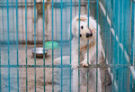 Foto de Shelter for stray dogs. Street dogs in cages. - Imagen libre de derechos