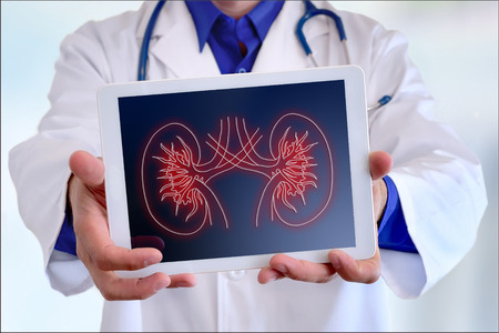 Photo pour Doctor close-up of a doctor showing a picture of a kidney on a tablet in a hospital - image libre de droit