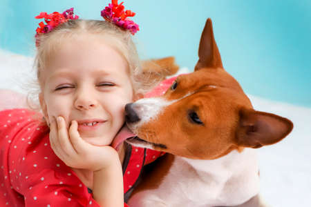 Foto de Little blonde curly girl hugging a red basenji dog. A dog licks a girl's cheek. - Imagen libre de derechos