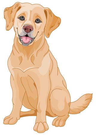 Illustration for Illustration of cute Golden Retriever dog - Royalty Free Image