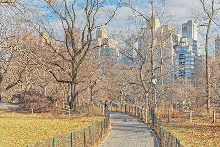 Photo for New York Central Park a dog walker in winter time - Royalty Free Image