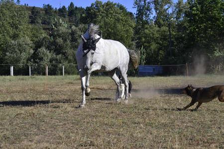 Foto de Horse running free at sunny day - Imagen libre de derechos