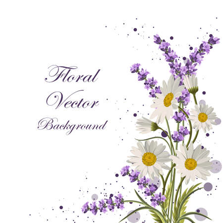 Illustration pour Beautiful daisies and lavender flowers on white background. - image libre de droit