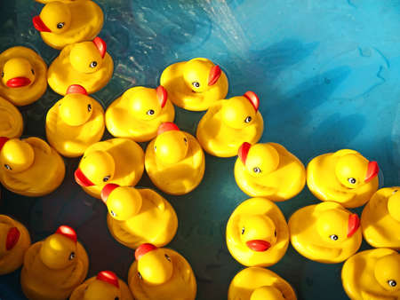 Photo for rubber ducks in a children's pool - Royalty Free Image