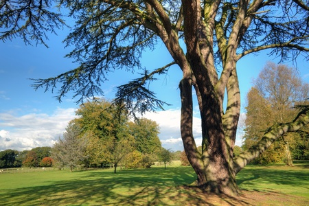 English countryside landscape with an ancient cedar tree
