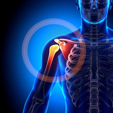 Photo pour Shoulder Joint Anatomy Bones - image libre de droit