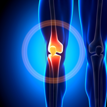 Photo pour Knee Joint Anatomy Bones - image libre de droit
