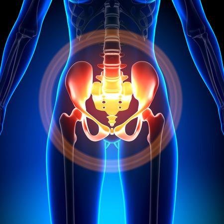 Photo for Female Hip - Sacrum / Pubis / Ischium / Ilium - Royalty Free Image