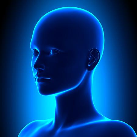 Photo for Isometric Female Head Anatomy - Royalty Free Image