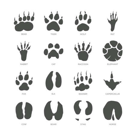 Ilustración de Animal trails - modern isolated vector set on white background with description. Bear, tiger, wolf, rat, rabbit, cat, racoon, elephant, fox, elk, badger, capercaillie, cow, boar, stag, horse footprint - Imagen libre de derechos