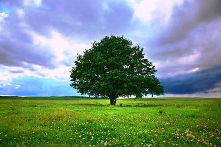 Photo for single tree in field under magical cloudy sky - Royalty Free Image