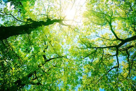 Photo pour Forest or park trees in sunlight. Nature in summer sun. - image libre de droit