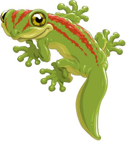 Cute green lizard a gecko