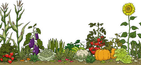 Ilustración de Vegetable garden bed on a white background vector illustration - Imagen libre de derechos
