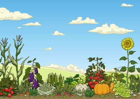 Ilustración de Landscape with vegetable garden bed vector illustration - Imagen libre de derechos