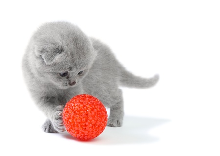 Little kitten playing with ball at white background